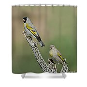 Lawrences Goldfinch Pair Perched Shower Curtain