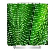 Layered Ferns I Shower Curtain