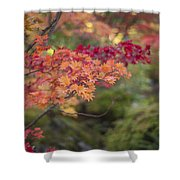 Layers Of Autumn Red Shower Curtain