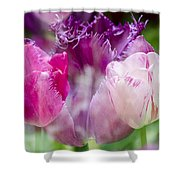 Layers Of Tulips II Shower Curtain