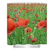 Laying In The Poppy Field Shower Curtain
