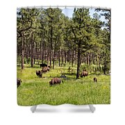 Lazily Grazing Bison Shower Curtain