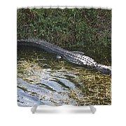 Lazy Alligator Shower Curtain