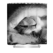 Lazy Day Bw Shower Curtain