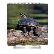 Lazy Day On A Log 6241 Shower Curtain