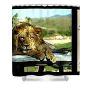 Lazy Lion With Poety Shower Curtain