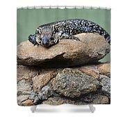 Lazy Lizard 2 Shower Curtain