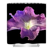 Lazy Petunia Shower Curtain