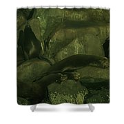 Lazy Sea Lions Shower Curtain by Jeff Swan