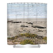 Lazy Seals Shower Curtain
