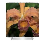 Lc. Roy Mcmillan  9865 Shower Curtain