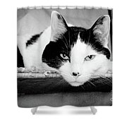 Le Cat Shower Curtain by Andee Design