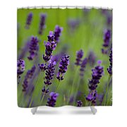 Lea Of Lavender Shower Curtain