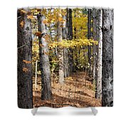 Leading To Autumn Shower Curtain