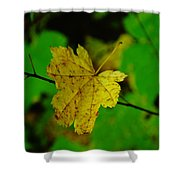 Leaf Caught On A Branch Shower Curtain