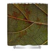 Leaf Design I Shower Curtain