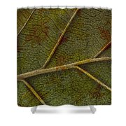 Leaf Design II Shower Curtain