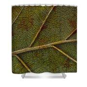 Leaf Design II Shower Curtain