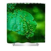 Leaf Gall Shower Curtain