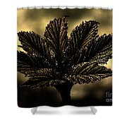 Leaf In A Special Light Shower Curtain