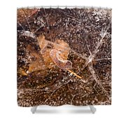 Leaf In Ice Shower Curtain by Anne Gilbert