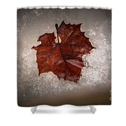 Leaf In Snow Shower Curtain