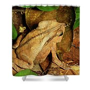Leaf Litter Toad Bufo Typhonius Shower Curtain