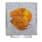Leaf On Granite 12 - Square Shower Curtain