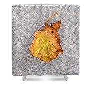 Leaf On Granite 4 - Square Shower Curtain