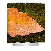 Leaf On Moss Shower Curtain by Adam Romanowicz