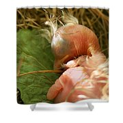 Leaf Pillow Shower Curtain by Shane Holsclaw