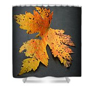 Leaf Portrait Shower Curtain