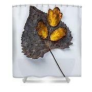 Leaf Study Shower Curtain