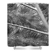Leaf Venation With Water Beads Shower Curtain