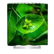 Leaf With Seeds Shower Curtain