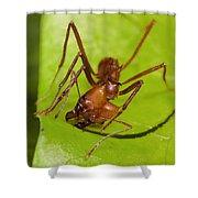 Leafcutter Ant Cutting Leaf Costa Rica Shower Curtain