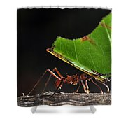 Leafcutter Ant Shower Curtain