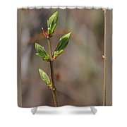 Leafing Out Shower Curtain