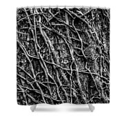 Leafless Ivy Shower Curtain