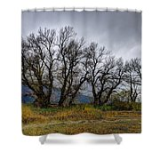 Leafless Trees Shower Curtain