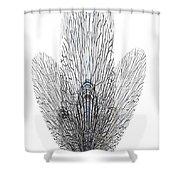 Leafs Shower Curtain