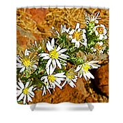 Leafy-bract Asters In Wildcat Canyon Trail Along Kolob Terrace Road In Zion National Park-utah Shower Curtain