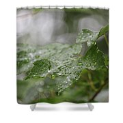 Leafy Raindrops Shower Curtain