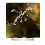 Leafy Sea Dragon Hatchling Rapid Bay Shower Curtain by John Lewis