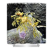 Leafy Seadragon Shower Curtain