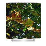 Leafy Tree Image Shower Curtain
