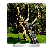 Leaning Cedars Of West Chop Shower Curtain