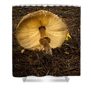 Leaning Fungi Shower Curtain