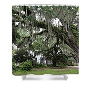 Leaning Live Oak Shower Curtain
