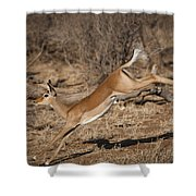 Leaping Impala Shower Curtain